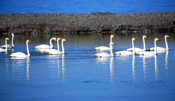 唐山天鹅湖动物乐园