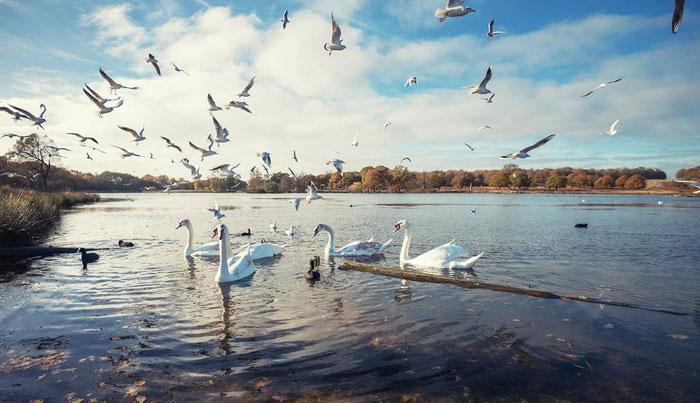 唐山天鹅湖动物乐园一日游