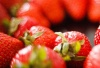 【自驾招募】儿童免费!3月24日一起去采摘草莓、西红柿吧!