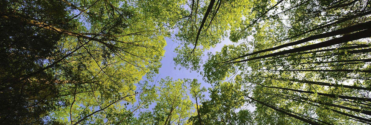 【回顾】植树归来,虽然没有阳光但你们的热情比阳光还温暖